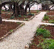 Garden of Gethsemene by Revd Andy Barton