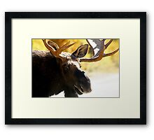 Bull Maine Moose Framed Print