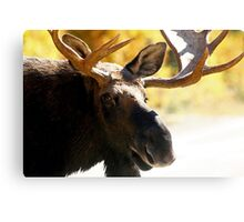 Bull Maine Moose Canvas Print
