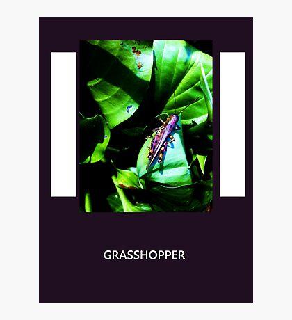 Purple Grasshopper Photographic Print