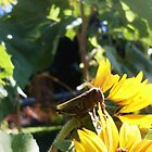 grashopper eating a sunflower by ItsAnOddWorld