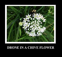 Drone in a Chive by ItsAnOddWorld