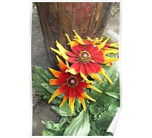 Red Top Market Flowers    4246 Poster