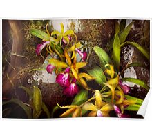 Flower - Orchid - Cattleya - There's something about orchids  Poster