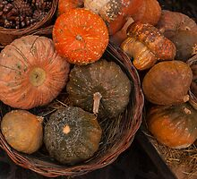 Pumpkins by lindy sherwell