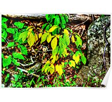 Autumn Leaves In Green And Yellow Poster