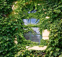 Ivy covered window by jwwallace