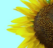 Sunflower Mint by RichCaspian