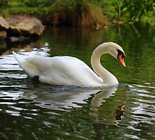 Swan Paradise by Theresa Selley