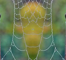 Mirrored Dew Drops by relayer51