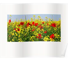 Poppies no2 Poster