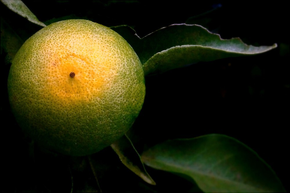 A Tangerine Grows by paintingsheep