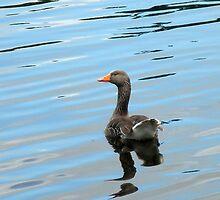 Goose by AxiomaticArt
