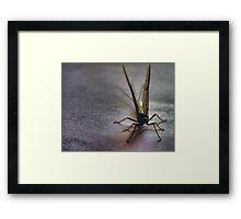 mayfly Framed Print