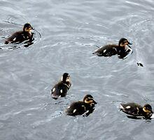 Duckings 02 by AxiomaticArt