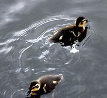 Duckings 03 by AxiomaticArt