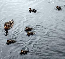 Duckings 04 by AxiomaticArt