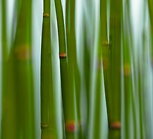 Through the Reeds by bgbcreative
