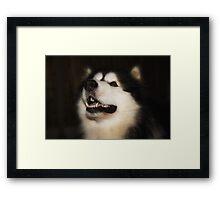 ' Siberian Husky '  Framed Print