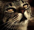 golden eyes by Ingz