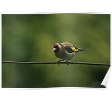 Hello mr gold finch! Poster