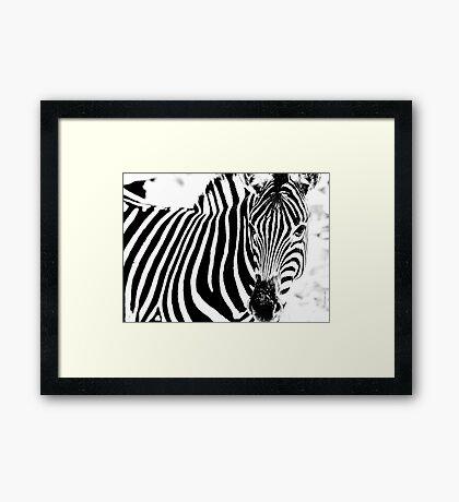 The Zebra Framed Print