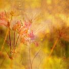 Rosebay Willowherb, September Abstract by Mike  Waldron