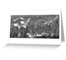 Egrets  7 Greeting Card