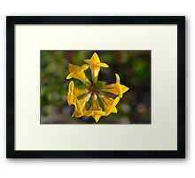 Natures Kaleidoscope Framed Print