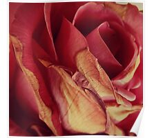 Faded Rose Poster