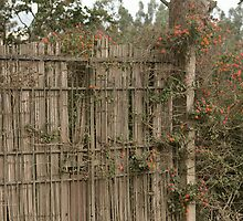 Flower and Ivy Covered Gate by rhamm