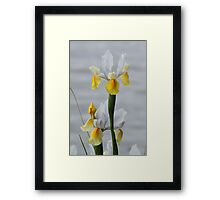 Iris by the Lake - Canberra Floriade Framed Print