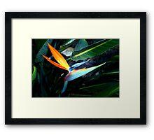 Inquisitive bird Framed Print