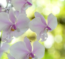 Highlights - orchid flower by Jenny Dean