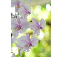 Highlights - orchid flower Photographic Print