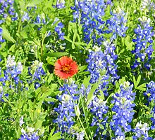 Texas Flowers by LeRoyM