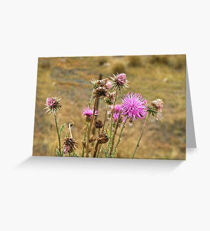 A weed is but an unloved flower Greeting Card