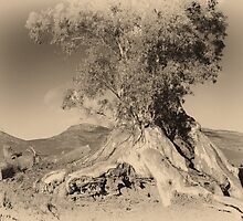 The Cazneaux tree by aussie-visions