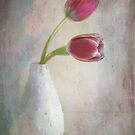 antique tulips by Teresa Pople