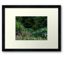 MORAY WILDERNESS Framed Print