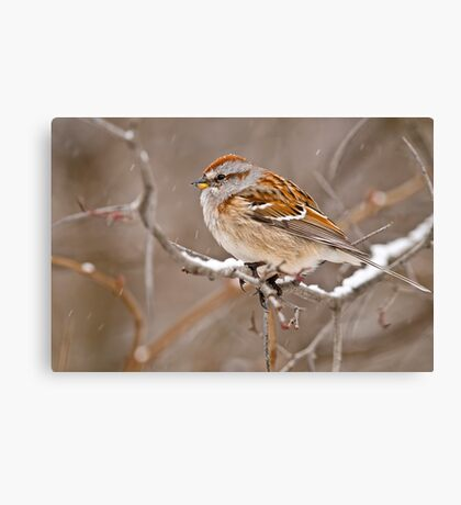 American Tree Sparrow Canvas Print