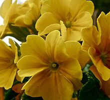 Yellow in Bloom by Lauramazing