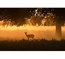 Morning in Bushy Park Photographic Print