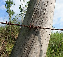 Rusted Barbed Wire by rhamm