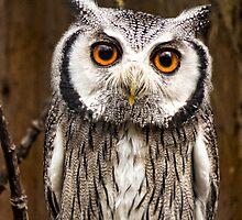 Owl by ProphecyStones