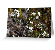 Native Plant Greeting Card