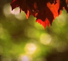 """""""  Sun Kissed Amid The Cloak Of Autumn """" by Richard Couchman"""