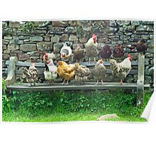 Hens on a bench Poster
