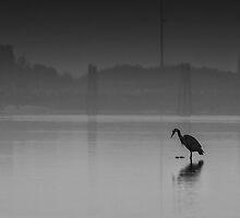 Low Tide in Cowichan Bay by David Chang