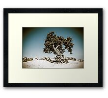 Bonsai Wannabe Framed Print